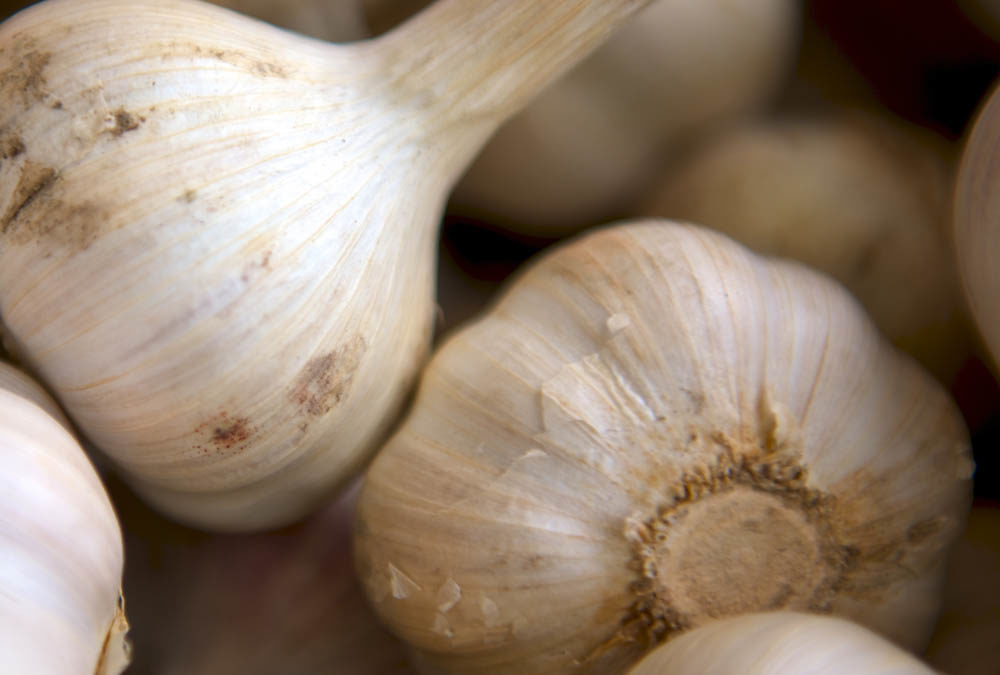 Benefits of Garlic – Is That Your Hair I Smell or Baked Ziti?